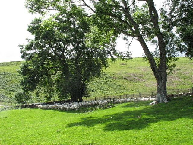 A temporary halt beneath the trees