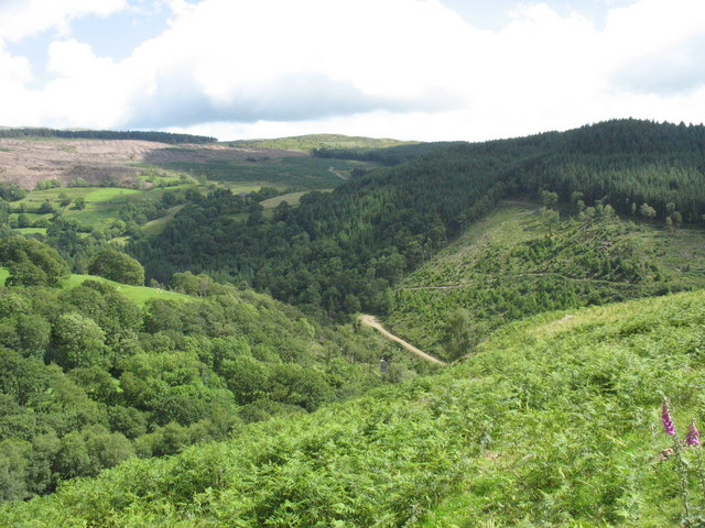 View down from the road to the site of the Bedd y Coedwr Gold Mine