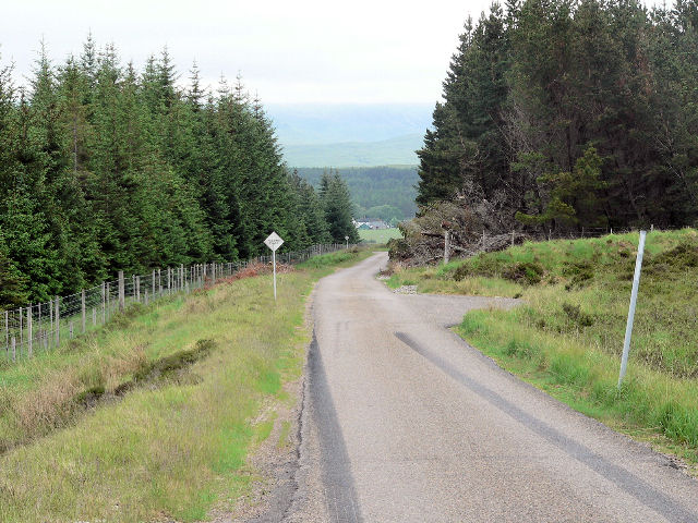 Road through Altan Buidhe plantation