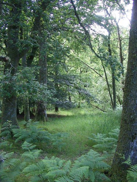 Woodland, Glen Artney