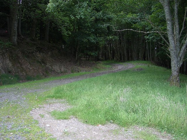 Track, Dalrannoch Wood