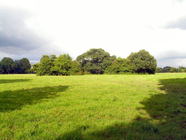 Copse near Twemlow Green