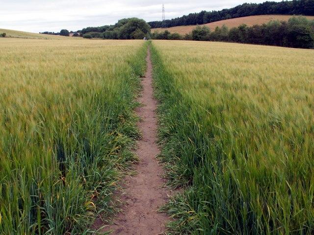 Footpath through wheatfield To Notton Village