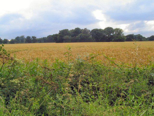 Field near Twemlow Green