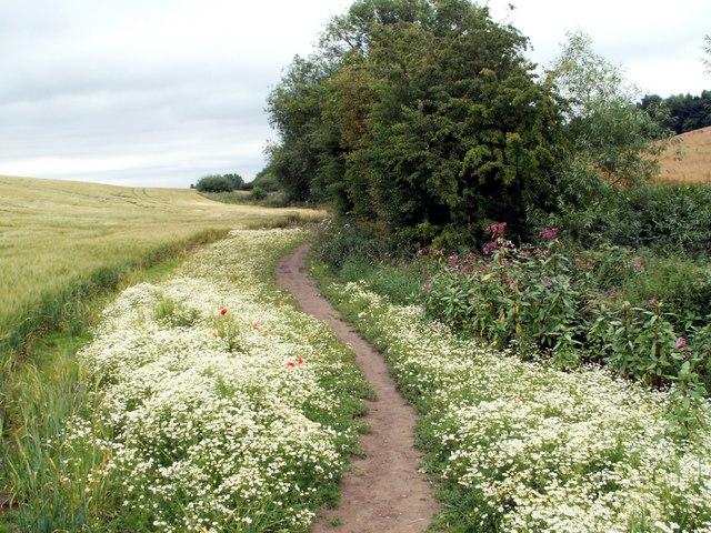 Footpath to Notton Village.