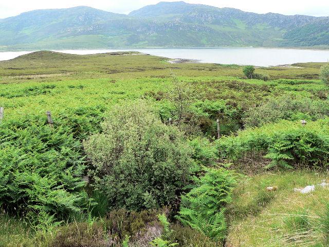 Rubh Armli, on Loch Eriboll