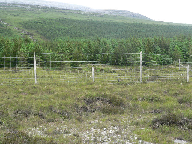 Deer fencing around young forest plantation