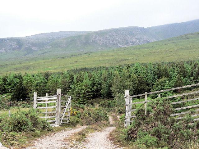 Gate into plantation