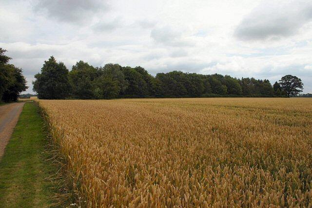 Home Farm, Coddenham Green