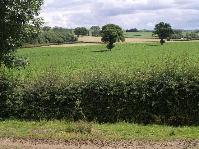 Fields beside the A303