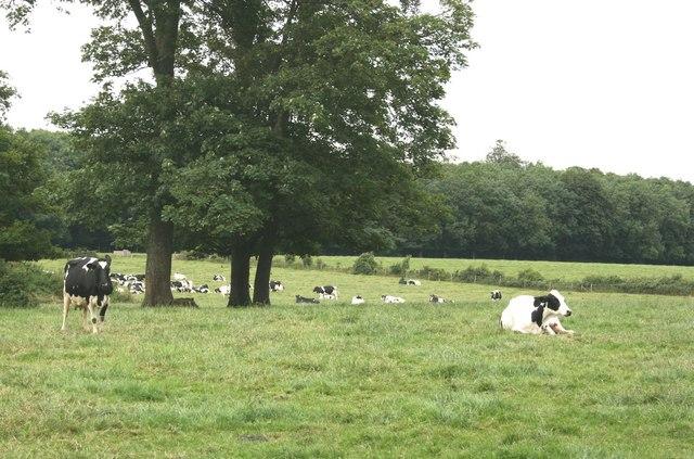 Camerton Farm