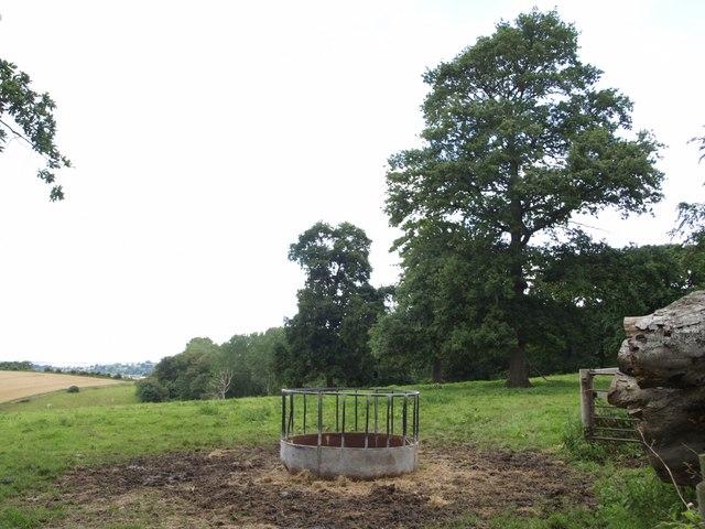 Parkland near Whitelackington