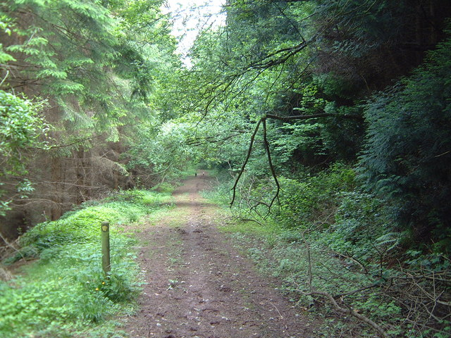 Footpath junction on forest road in Graig Wood