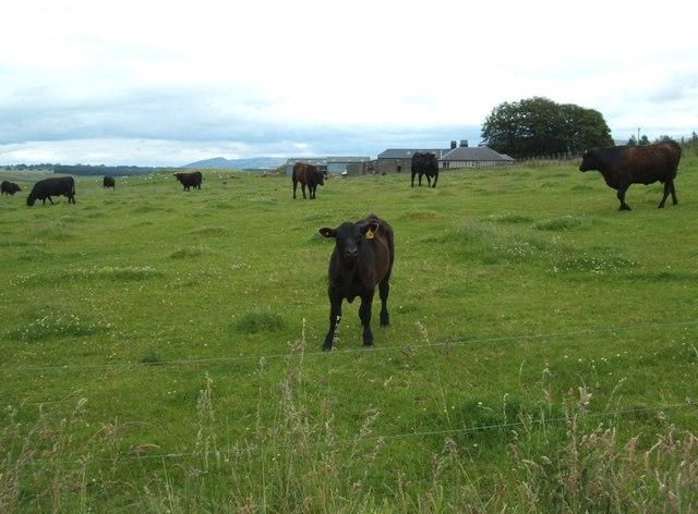 Looking East towards Netherton farm
