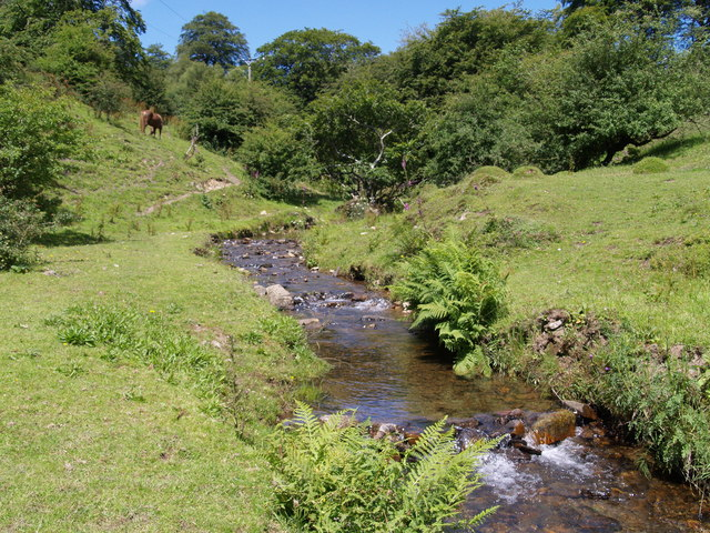 Cwm-celyn Woodland