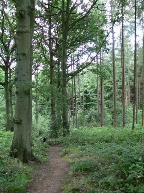 Footpath through Eymore Wood