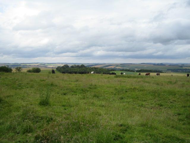 Iron Age settlement near Stockton Wood, Stockton