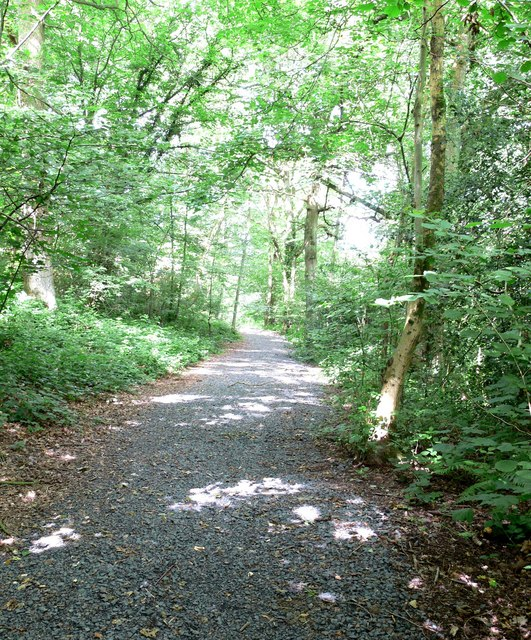 Public footpath through Eymore Wood