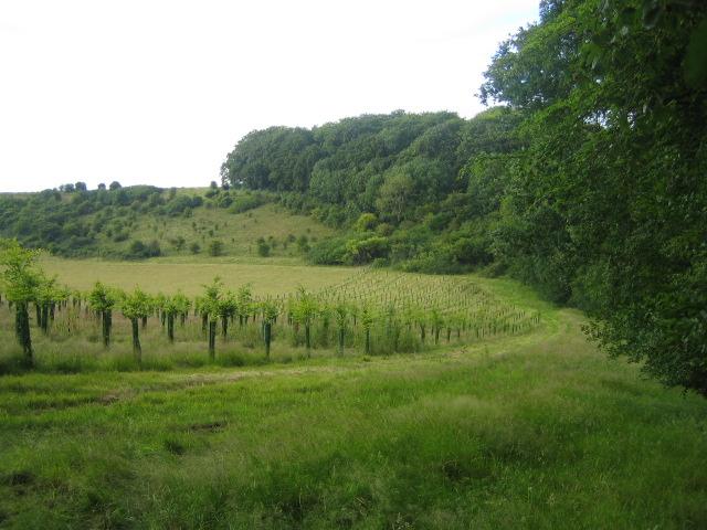 Bridleway near Ridge