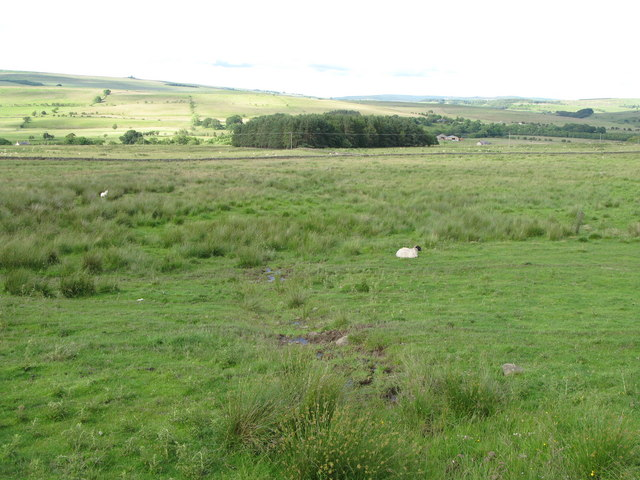 Pastures northeast of the B6320 near Bellingham