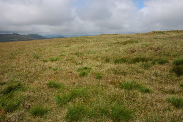 Whitecombe Moss
