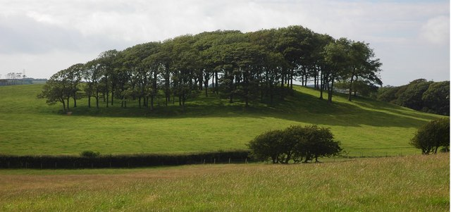 Clump of trees near Bootle