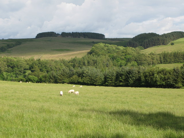 Pastures and woodland near Anton Hill
