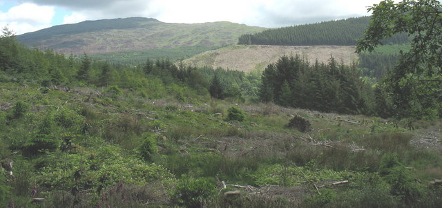 Clear fell forest in Cwm Afon Wen with Rhobell Fawr in the background