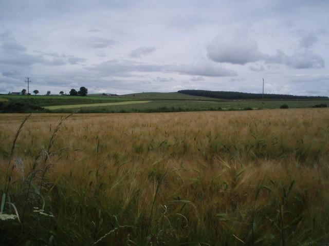 Farmland south of Bractullo