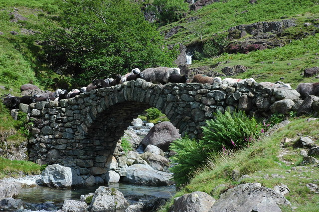 Sheep crossing Lingcove Bridge