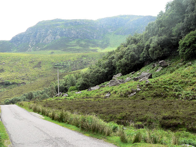 Forest on steep hillside