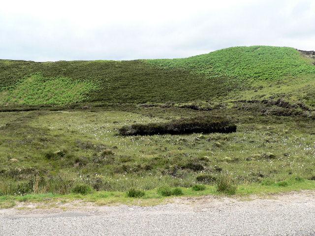 Old peat diggings