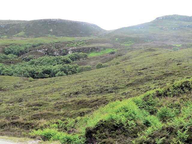 Thin strip of woodland, following a burn