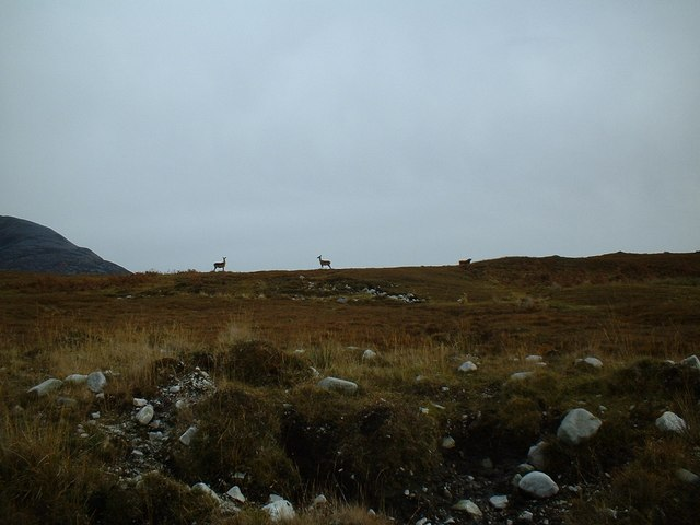 Deer near Paps of Jura