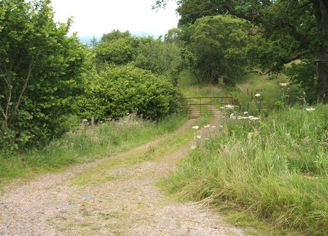 North West of Lower Whiteston
