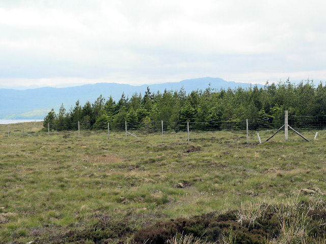 Strip of woodland