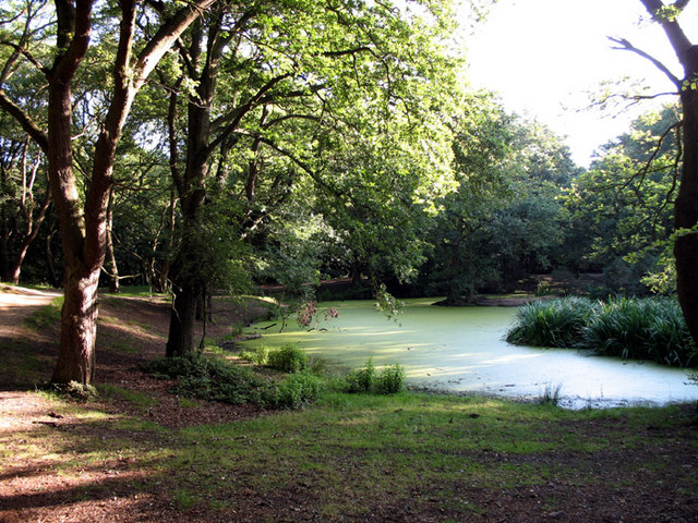 Sandy Heath Pond