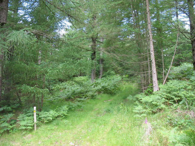 Forest footpath to Cwmheisian