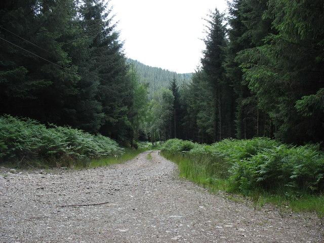 Forest track linking the Bwlch Garw and Mawddach forestry roads