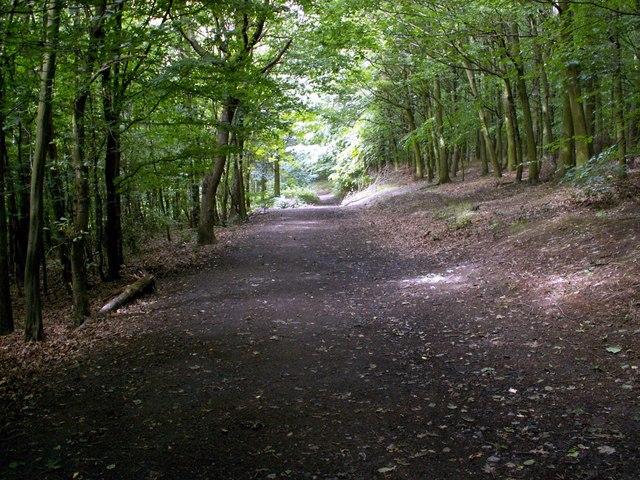 Bushcliff Wood Track