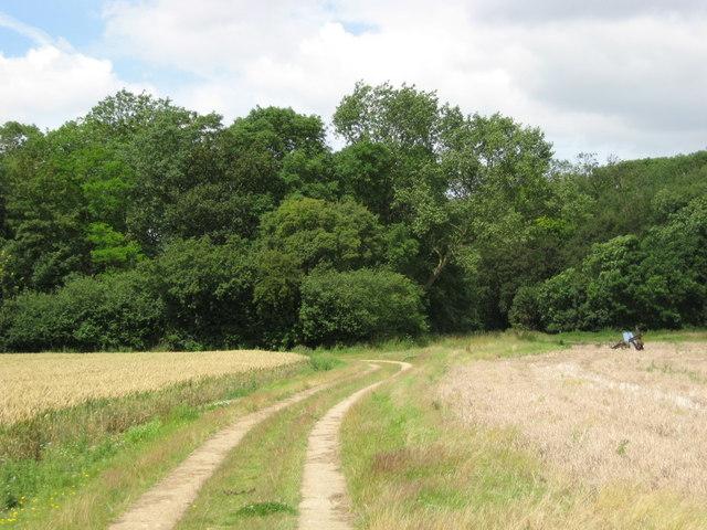 Sheepwash Grove, Nuthampstead