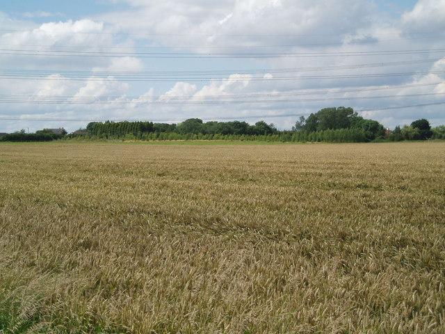 Beltoft over the fields
