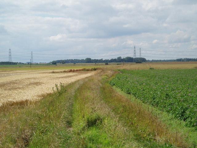 Lane view towards Buskey Wood