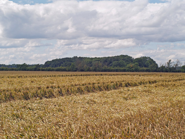 South Plantation