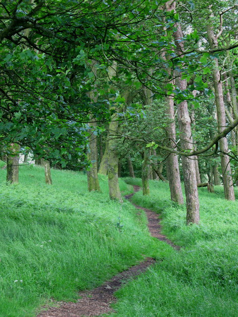 Hadrian's Wall Path near Sewing Shields Farm