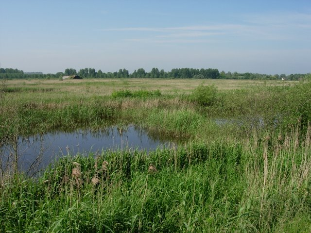 RSPB Lakenheath Fen