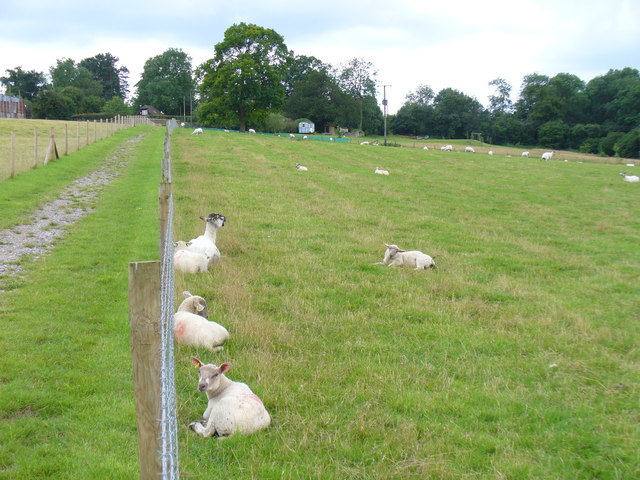 Sheep Lea in Sheepleas