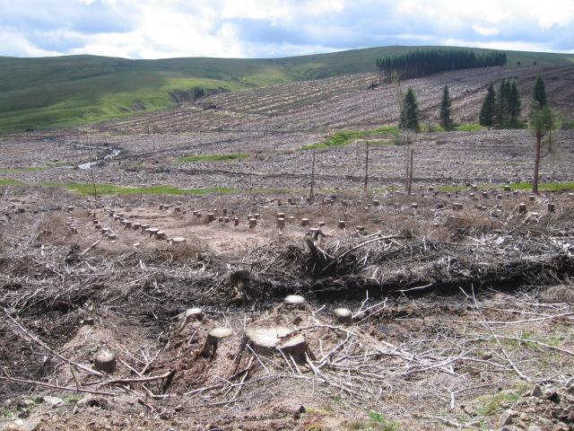 Felled woodland on Threep Moor