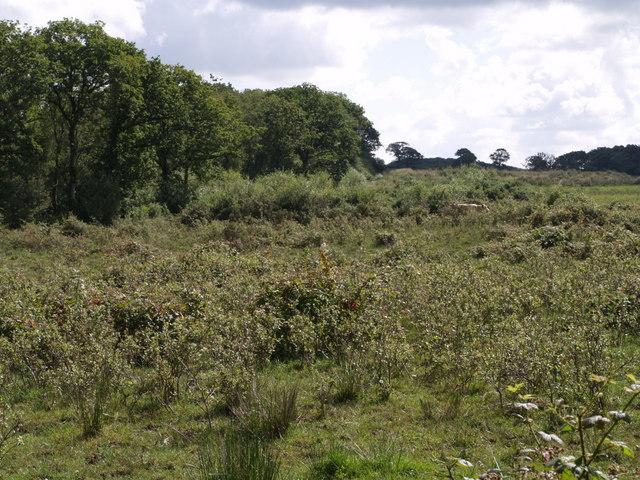 Rough pasture near Rutleigh Ball