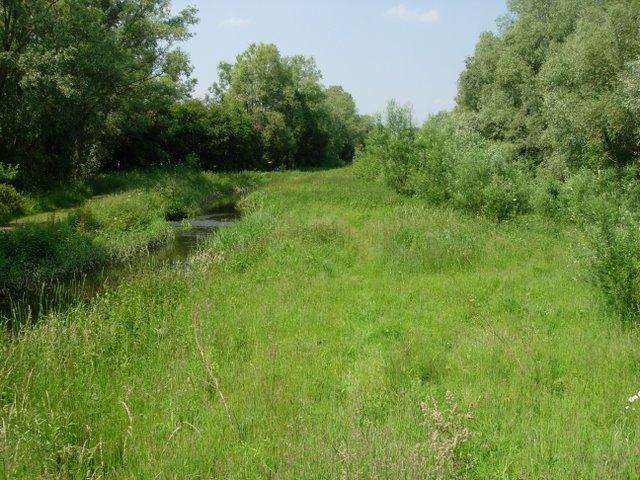 Stream and Grassland